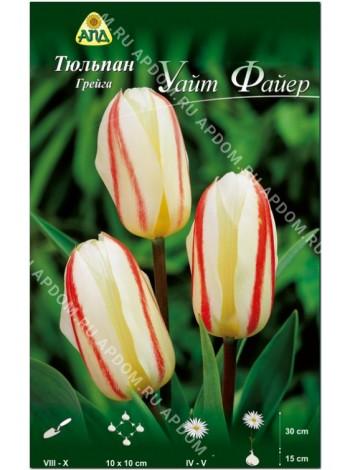 Тюльпан Уайт Файер (Tulipa White Fire)