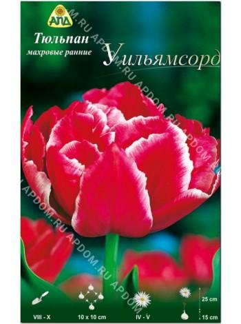Тюльпан Уильямсорд (Tulipa Willemsoord)