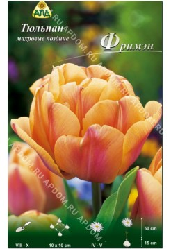 Тюльпан Фримэн