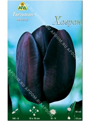 Тюльпан Хавран (Tulipa Havran)