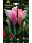 Тюльпан Чайна Таун (Tulipa China Town)