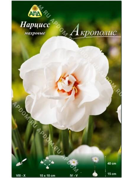 Нарцисс Акрополис