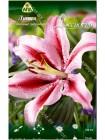 Лилия восточный Джейбёрд (Lilium oriental Jaybird)