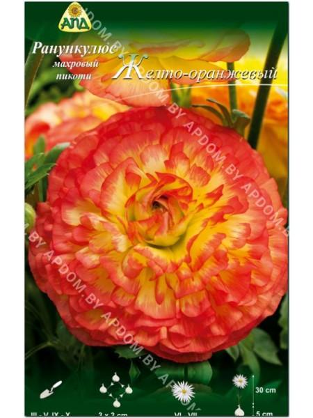 Ранункулюс желто-оранжевый пикоти