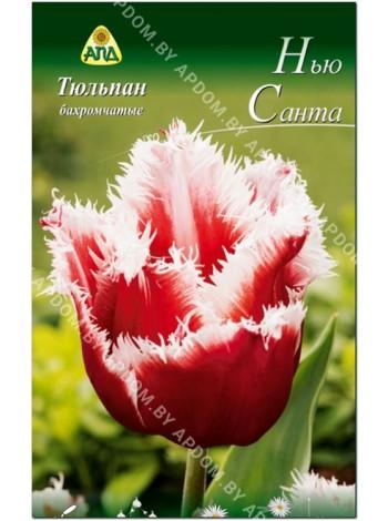 Тюльпан Нью Санта (Tulipa New Santa)