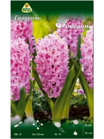 Гиацинт Фондант (Hyacinthus Fondant)