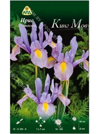 Ирис голландский Кинг Мов (Iris hollandica King Mauve)