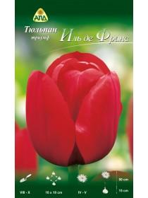 Тюльпан Иль де Франс