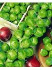 Капуста брюссельская Гронигер (Brassica oleracea var.gemmifera)
