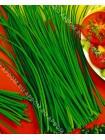 Лук-шнитт богемия (Allium schoenoprasum L)