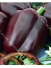 Перец сладкий Шоколадный Красавец F1 (Capsicum annum L.var.grossum)