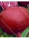 Свекла Красный Шар (Beta vulgaris L.var.conditiva)