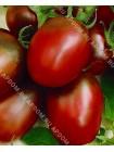 Томат Черный Мавр (Lycopersicon esculentum)