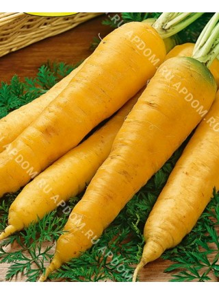 Морковь Жане де Добс