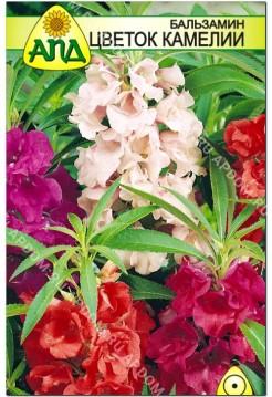 Бальзамин Цветок Камелии
