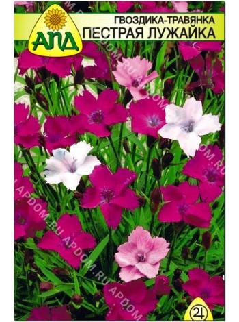 Гвоздика - травянка Пестрая Лужайка (Dianthus deltoides)