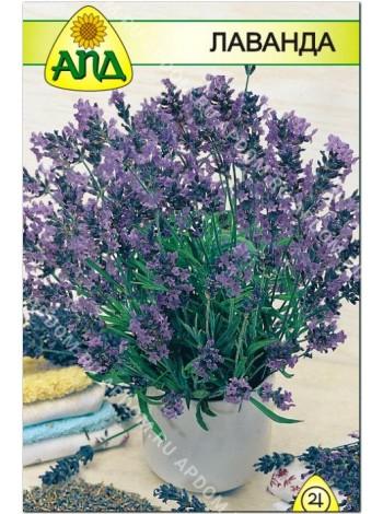 Лаванда (Lavandula angustifolia)