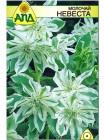 Молочай Невеста (Euphorbia marginata)