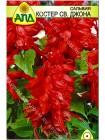 Сальвия Костер св. Джона (Salvia splendens)