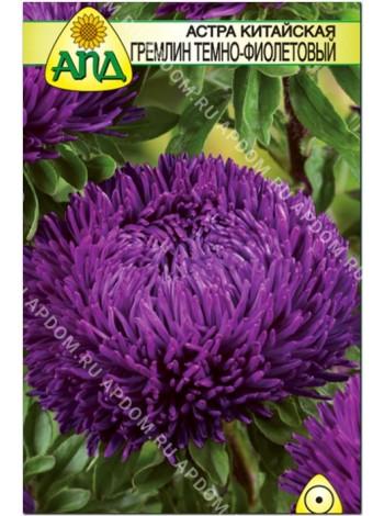 Астра Гремлин темно-фиолетовый (Callistephus chinensis)